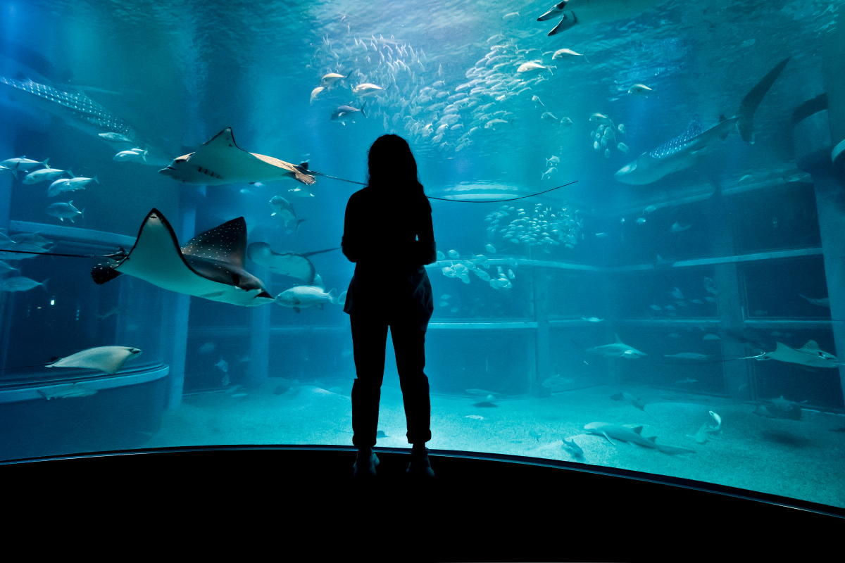 sphoto, sphotohi ,sphotohawaii, hawaii, japan, travel, photography, aquarium, osaka, jellyfish, model